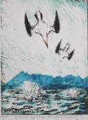 Gannets off Skye